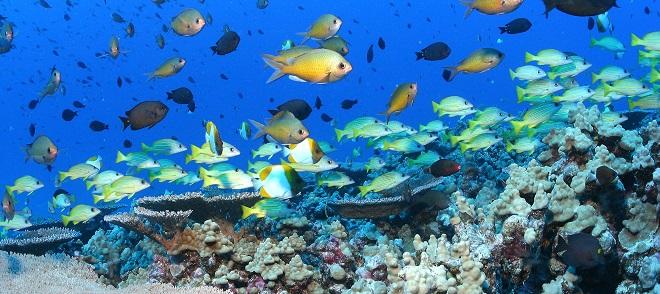 Ocean Ecosystem